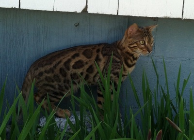 How To Build Your Own Catio Building A Catio For My Cats